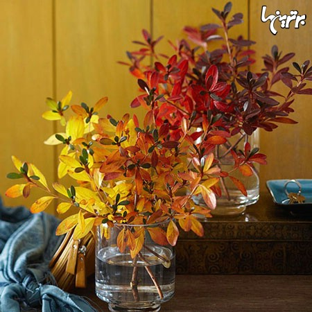 زیبایی پاییز در گوشهوکنار خانه