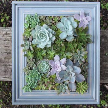 گیاهان مناسب خانه های مدرن