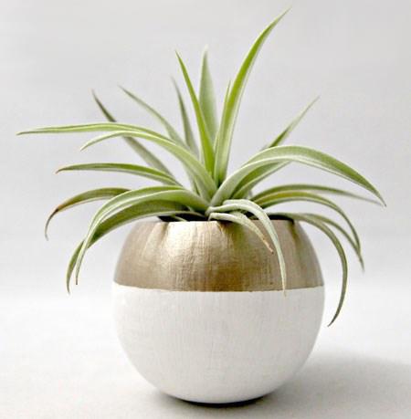 گیاهانی با خانه هایی با سبک مدرن,نحوه استفاده از گل در چیدمان خانه