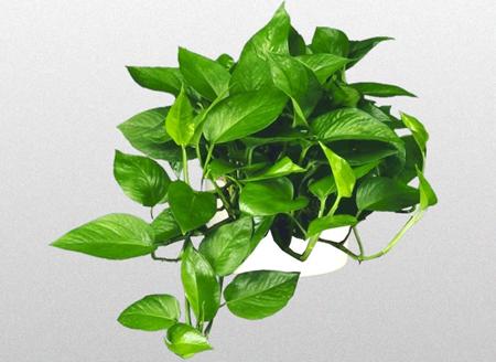 گیاهانی با سبک های مدرن خانه, گیاهانی با خانه هایی با سبک مدرن